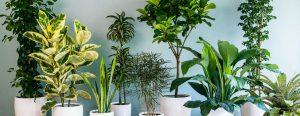 گل های آپارتمانی ، معرفی ۲۰ گیاه آپارتمانی فریبنده که عمر طولانی دارند